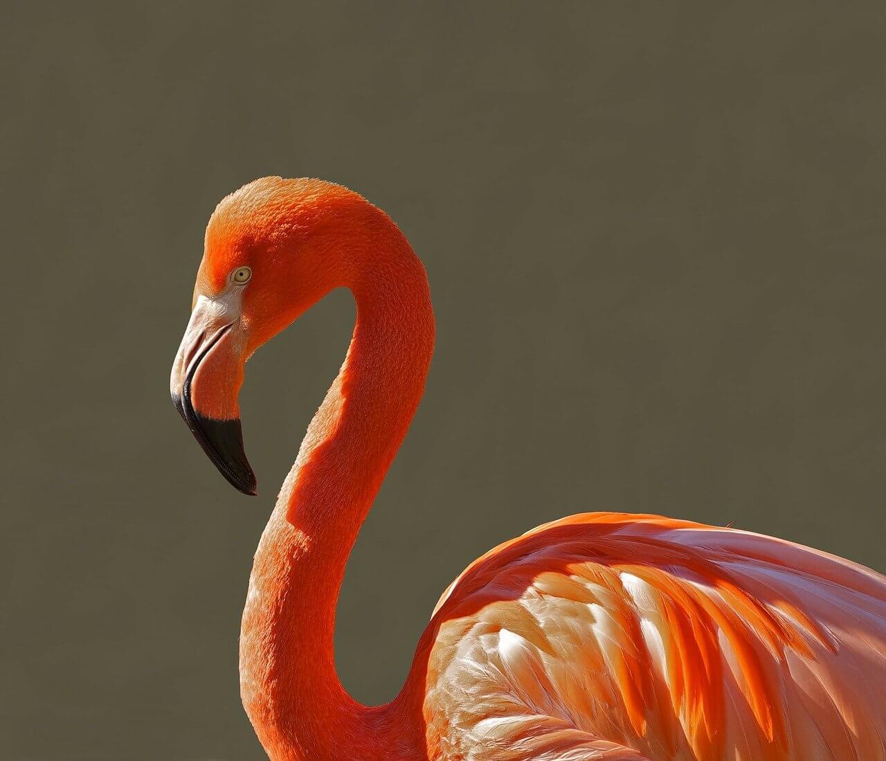 米津玄師 Flamingo